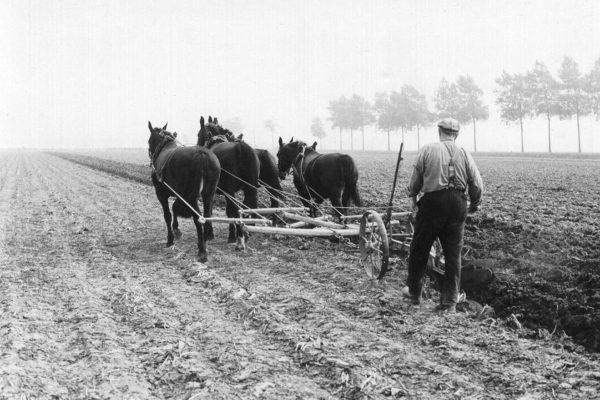 ploegen op de olmenhorst