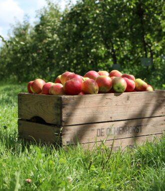 bakje met appels